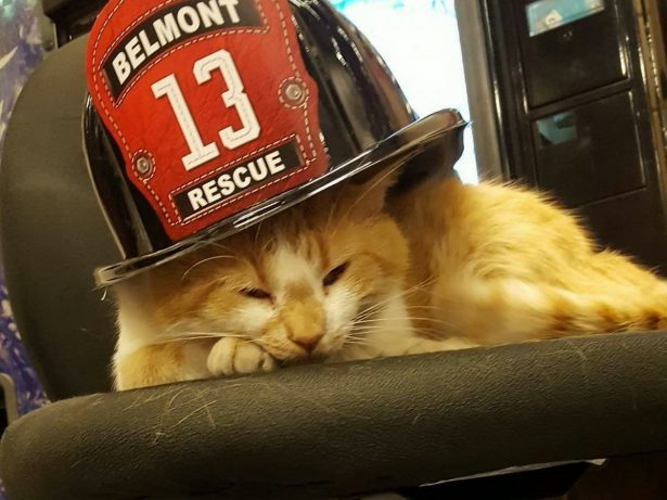 Stray Kitten Rescued by Hunky Fireman Becomes Station Therapy Cat