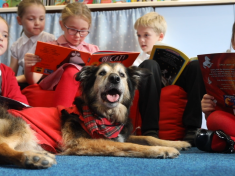 This Adorable Pooch Is Helping Primary School Children Learn To Read – And Even Has His Own Uniform And Backpack