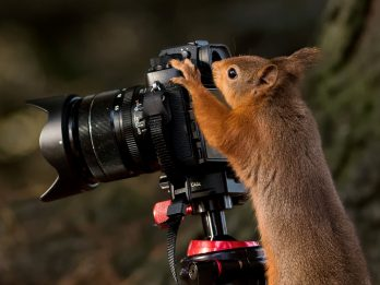 Cheeky Red Squirrel Takes Over From The Camera Man To Show Him How It's Done