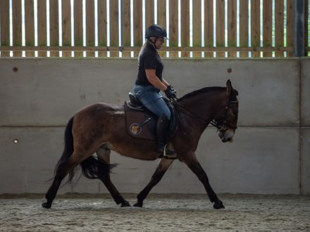 Talented Mule Can Now Take Part In Competitions After British Dressage Lifts Ban