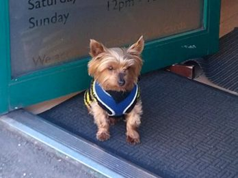 Police Seize OAP's 'Dangerous' Yorkshire Terrier With No TEETH - Over Claims It Bit A Postman