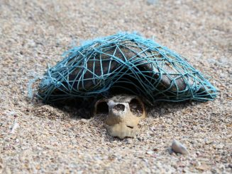 This Shocking Picture Shows A Turtle Skull - Beneath Its Shell Still Wrapped In The Plastic That Killed It
