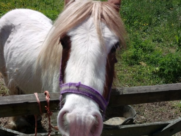 Cute Abandoned Horse Could Be Destroyed Unless Owner Claims It
