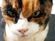 ME-OWW! – Cat Has Miracle Escape After An Aerosol Can Exploded In Its Face
