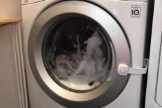 Mum Tells How She Found Her Three-Year-Old LOCKED INSIDE Their Washing Machine – As The Drum Filled With Water