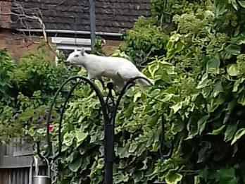 Gran Captures Extraordinary Footage Of Rare White Squirrel In Her Garden