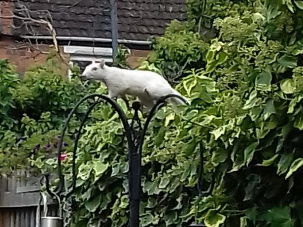 Gran Captures Extraordinary Footage Of Rare White Squirrel In Her Garden