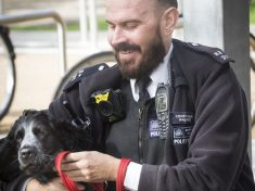 Stressed-Out Coppers Are Getting Psychological Support – By Cuddling PUPPIES