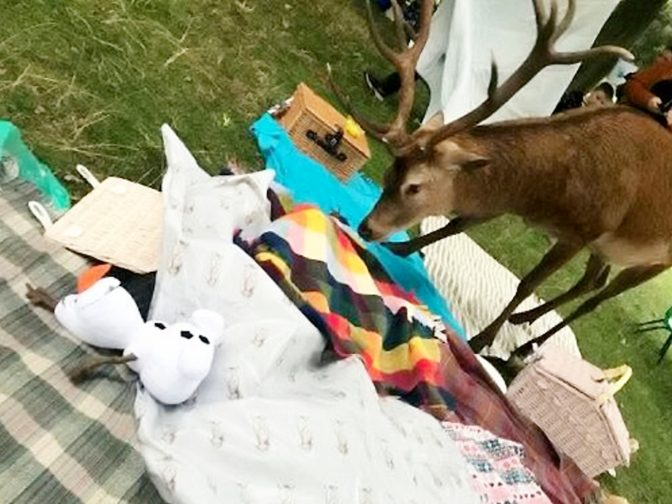 Hungry Deer Raids Charity Picnic